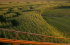 Minnesota's Largest Corn Maze