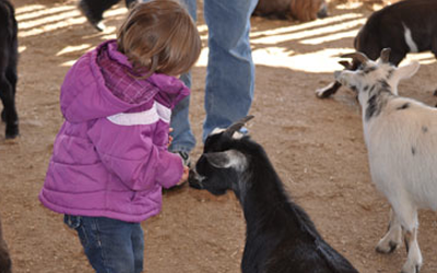 Petting Zoo at the Harvest Festival